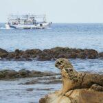 特搜「东北角3处奇岩怪石」!鬆狮犬看海打盹模样超萌
