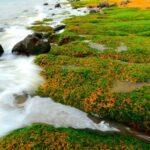 全台必看的3处「老梅绿石槽」 看浪花拍打绿色地毯好放鬆