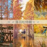 宛如仙境!盤點全台9大落羽松景點 蜊埤湖拍出夢幻歐風